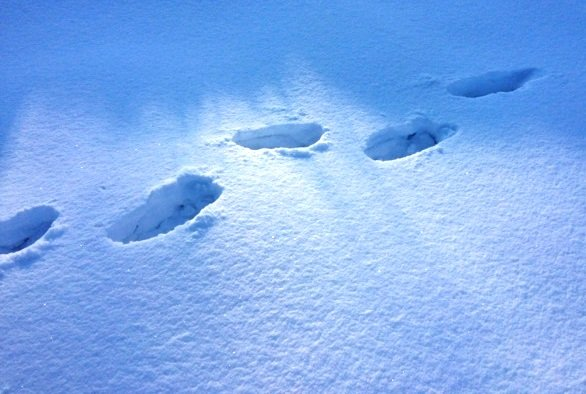 Cabin 19: Footprints in the Snow